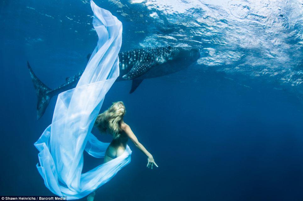 squali-balena-fotomodelle-01