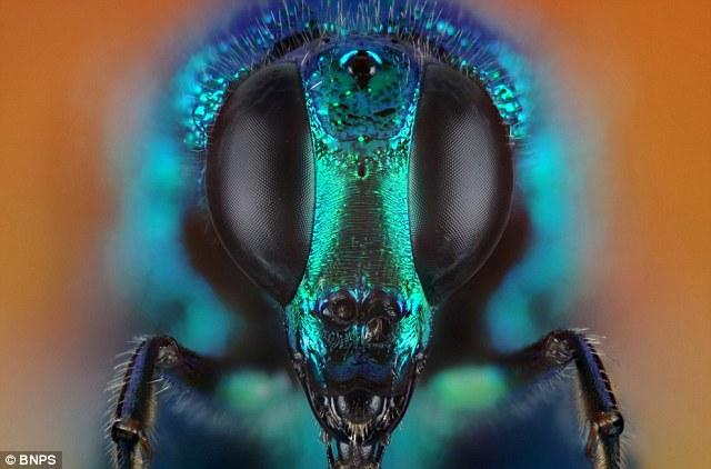insetti-foto