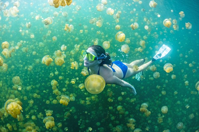 meduse, Jellyfish Lake