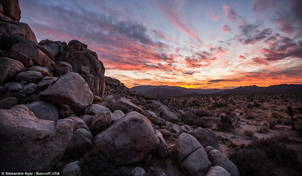 02 - America, paesaggi Joshua Tree National Park California