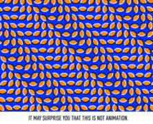 La magia dell'optical art: guarda alcune delle più straordinarie illusioni ottiche