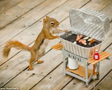 Gli incredibili scoiattoli: mai viste immagini così!