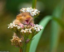 Guarda l'irresistibile ghiretto felice per l'arrivo della primavera