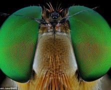 Mai così vicini: guarda gli straordinari primi piani degli insetti dai colori brillanti