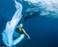 Guarda le straordinarie fotografie subacquee delle modelle che posano insieme agli squali balena